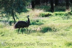 Emu-Western-Plains-Zoo-19-4-2005-SMT
