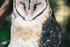 Masked-Owl-Taranna-TAS-23-2-2007-SMT